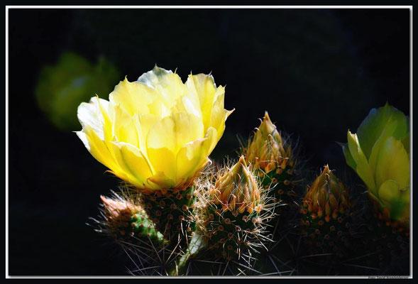 LAN025 Jardin de Cactus