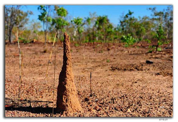 AU0107.Termitenbau