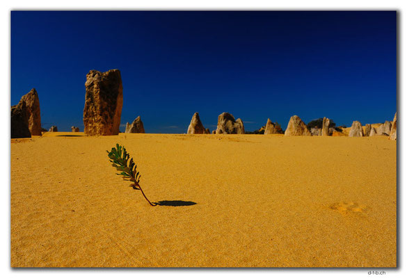 AU0590.Nambung N.P.Pinnacles