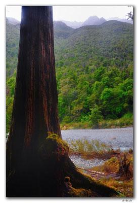 NZ0668.Nelson Lakes N.P.Mt.Cupola