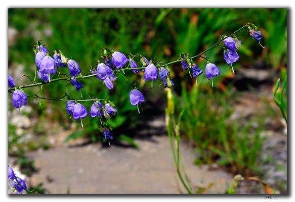 CN0354.Shixia.Blume bei Grosser Mauer