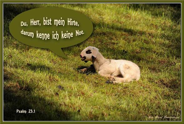 S0124.Lamm.Seewis.CH.Psalm 23.1