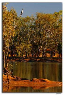 AU0231.Ellendale Lake.Shag & Croc