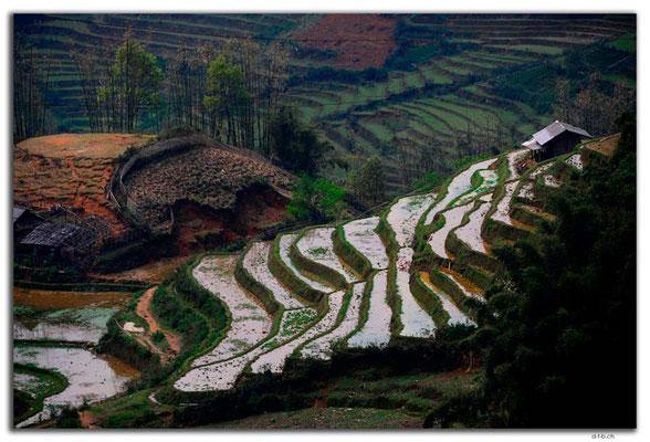 VN0054.Sapa.Muong Hoa Valley
