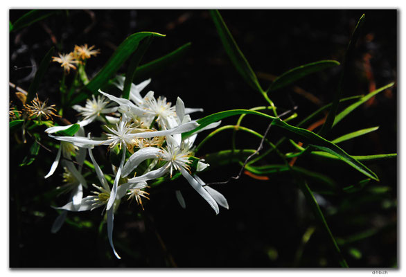 AU0569.Grigsons Lookout.Blume