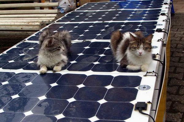 GE: Batumi, Katzen auf Solarpanel des Solatrikes