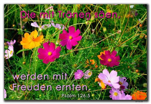S0263.Hanam.KR. Psalm 126.5