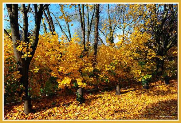 A0593.Herbstlaub.Trier.