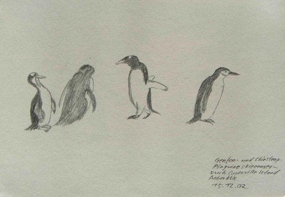 019.Skizze, Gentoo- und Chinstrappinguine, Cuverville Island /Antarktis