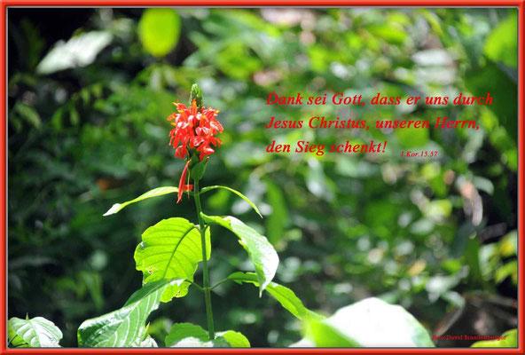 S0129.Blume.JM. 1.Korinther 15.57