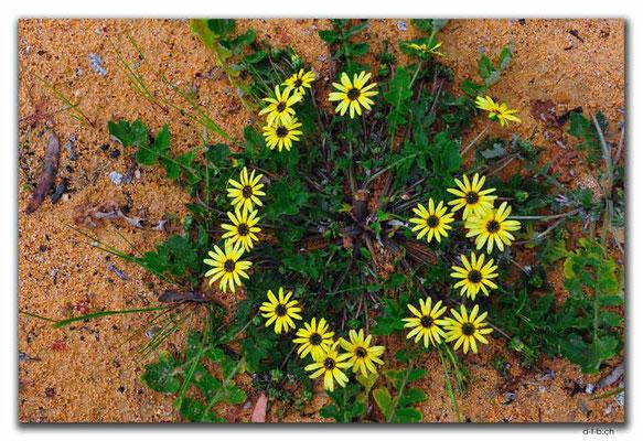 AU0667.York.Blumen
