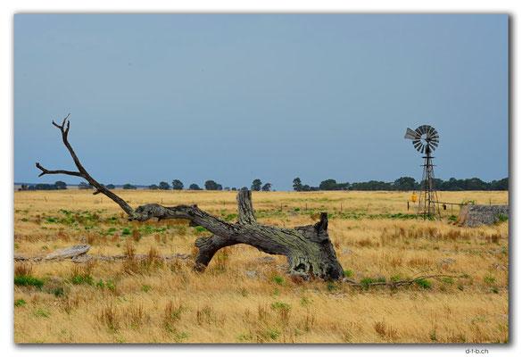 AU1006.Eyre Peninsula.Feld mit Windrad