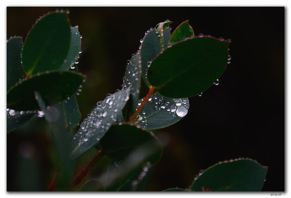AU1344.Overland Track.Waterdrops
