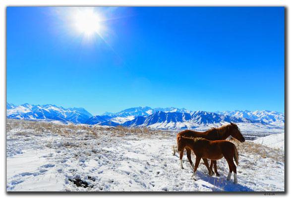 KG0033.Bishkek.Kyrgyz Ala Too und Pferde