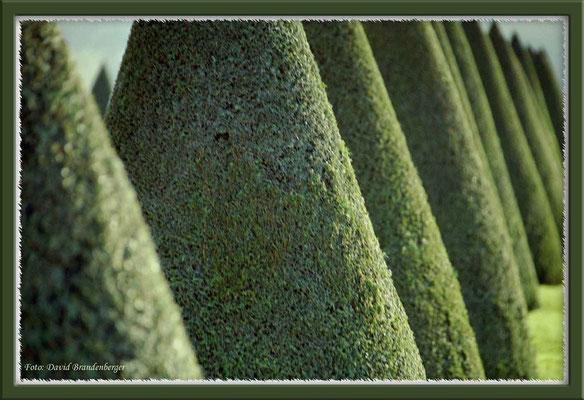 A0127.Bäume.Versailles.FR