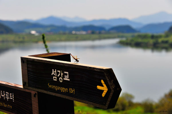 Südkorea, Libelle