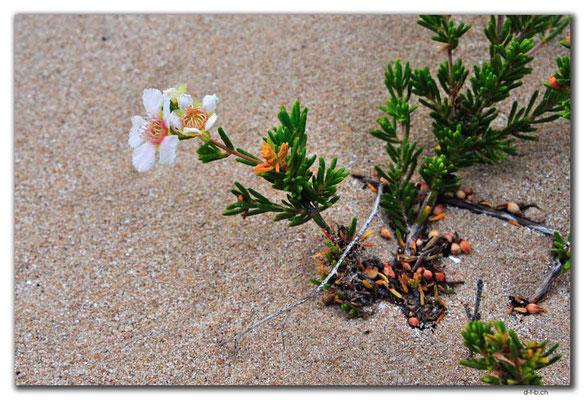 AU0380.Coral Bay.Blume