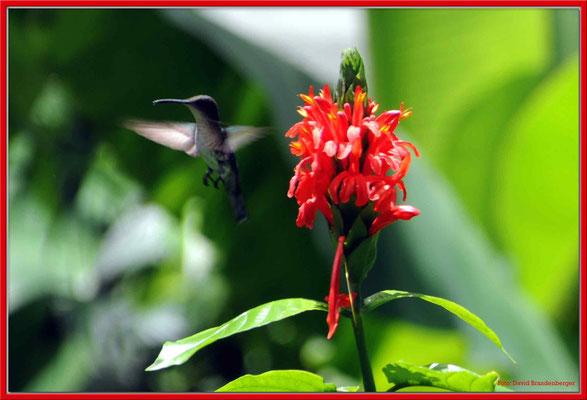 JM010 Blume und Kolibri