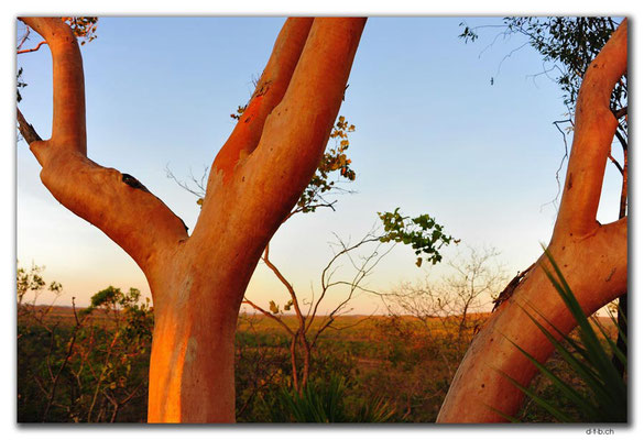AU0101.Marumba.Bäume