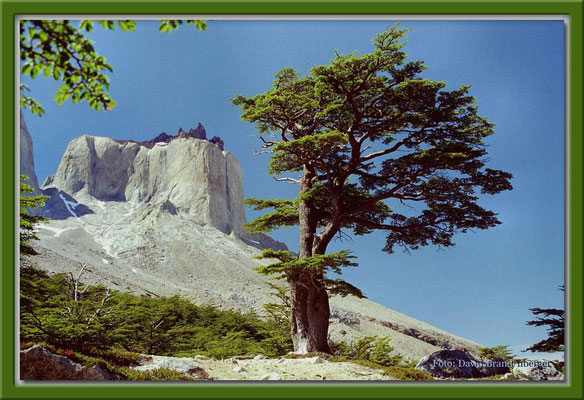 90.P.N. Torres del Paine,Chile