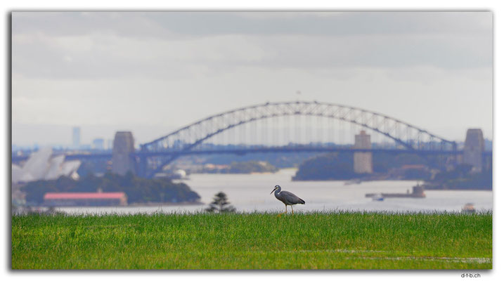 AU1643.Sydney.View from Dudley Page Reserve