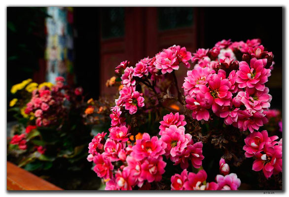 CN0292.Hohhot. Dazhao Kloster