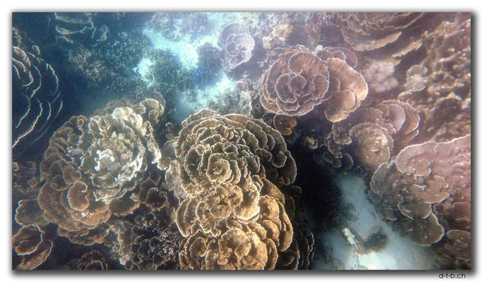 AU0378.Coral Bay.Korallen