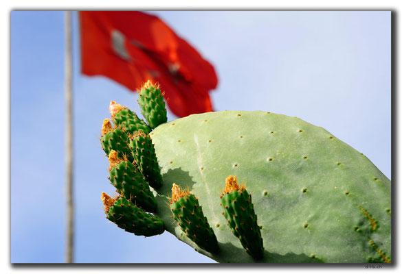 TR0635.Tarsus.Kaktusblüte