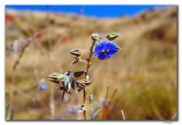 AU0316.Karratha.Blume