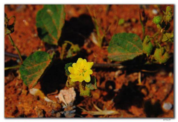 AU0392.Blume