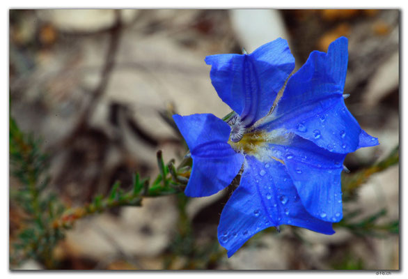 AU0644.Mt.Observation.Blume