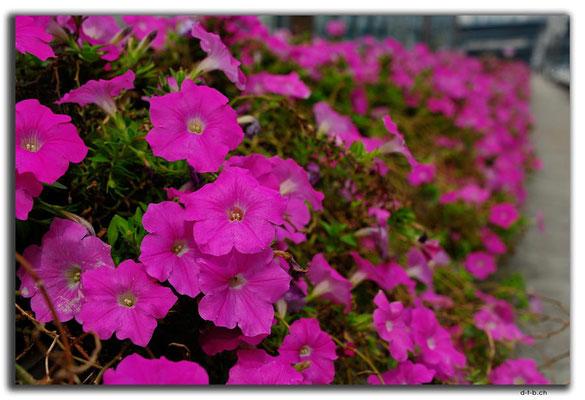 KR0165.Busan.Blumen auf Suyeong 2 Bridge