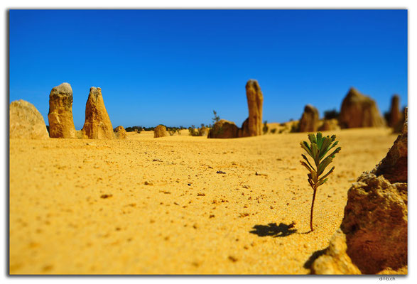 AU0588.Nambung N.P.Pinnacles