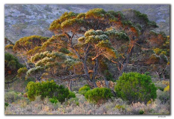 AU0920.Roe Plain.Baum.