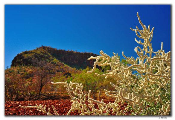 AU00152.Pinkerton Range