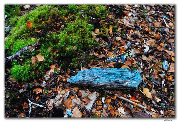 NZ0531.Kahurangi N.P.Grünes Holz