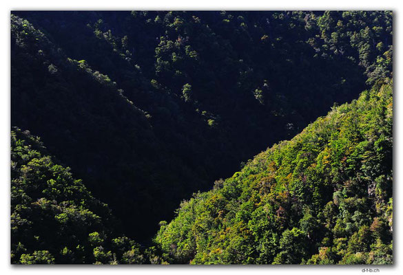 NZ0546.Kahurangi N.P.Takaka River Valley