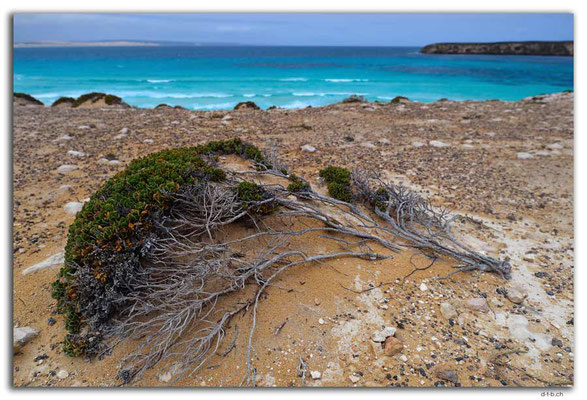 AU1021.Coffin Bay N.P. Golden Island Lookout