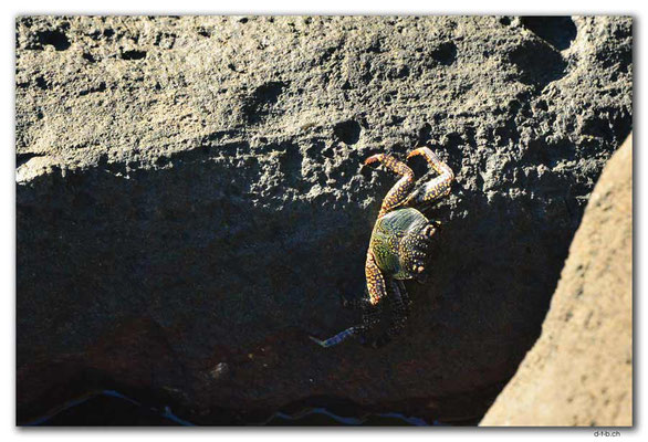 FJ0083.Vatia Beach.Crab