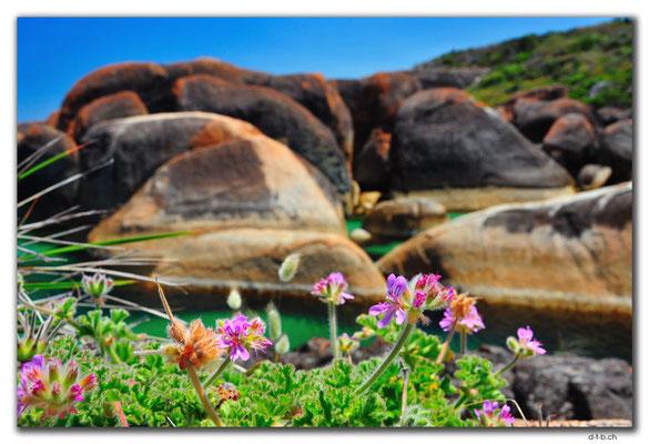 AU0805.Elephant Rocks