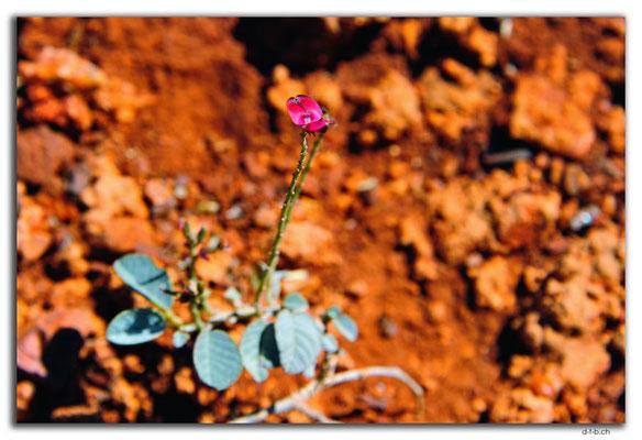 AU0317.Karratha.Blume