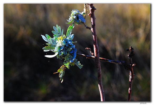 AU0332.Karratha.Blume