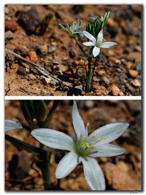 TR0660.Blume