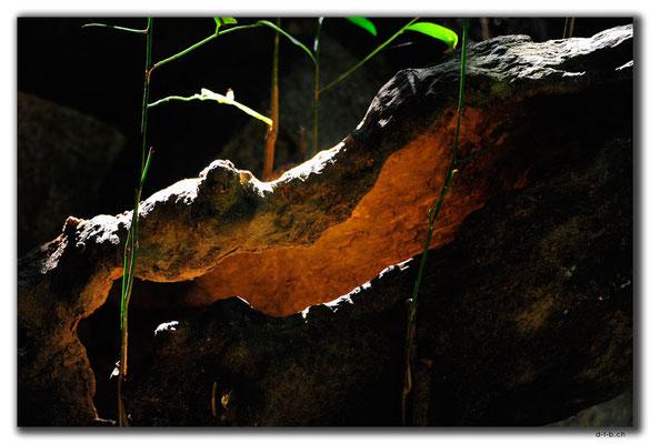 CN0477.Sanya.Yalong Bay Tropic Forest Park.Baumkrokodil
