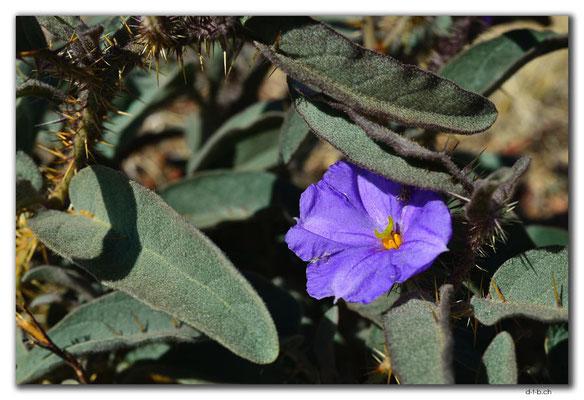 AU0238.Blume