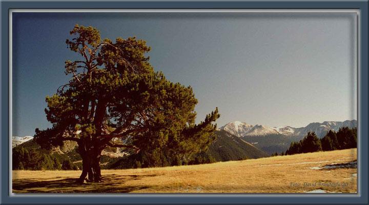 A0133.Coll d'Ordino.Andorra