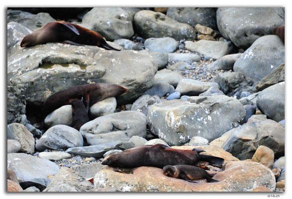 NZ0695.Ohau Point.Seals