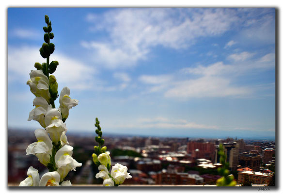 AM010.Yerevan.Orchidee