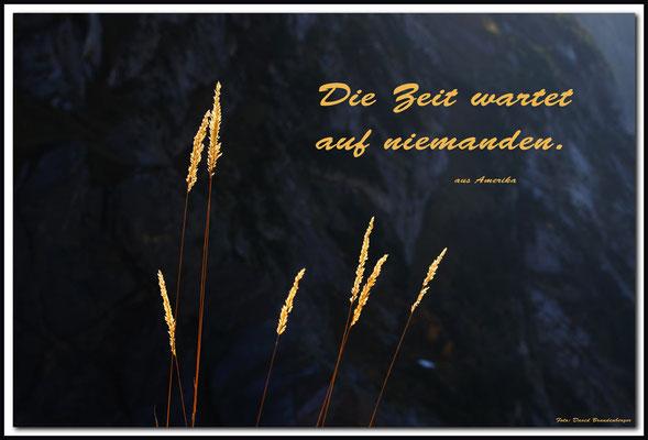 S0197.Pflanzenhalme.Grindelwald.CH. Text aus Amerika