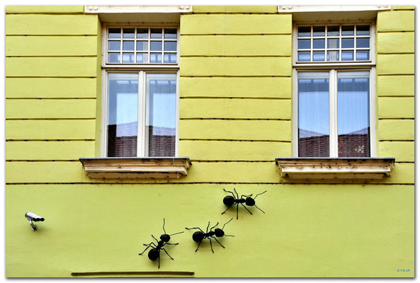 CZ011.Brno.Beobachtete Ameisen